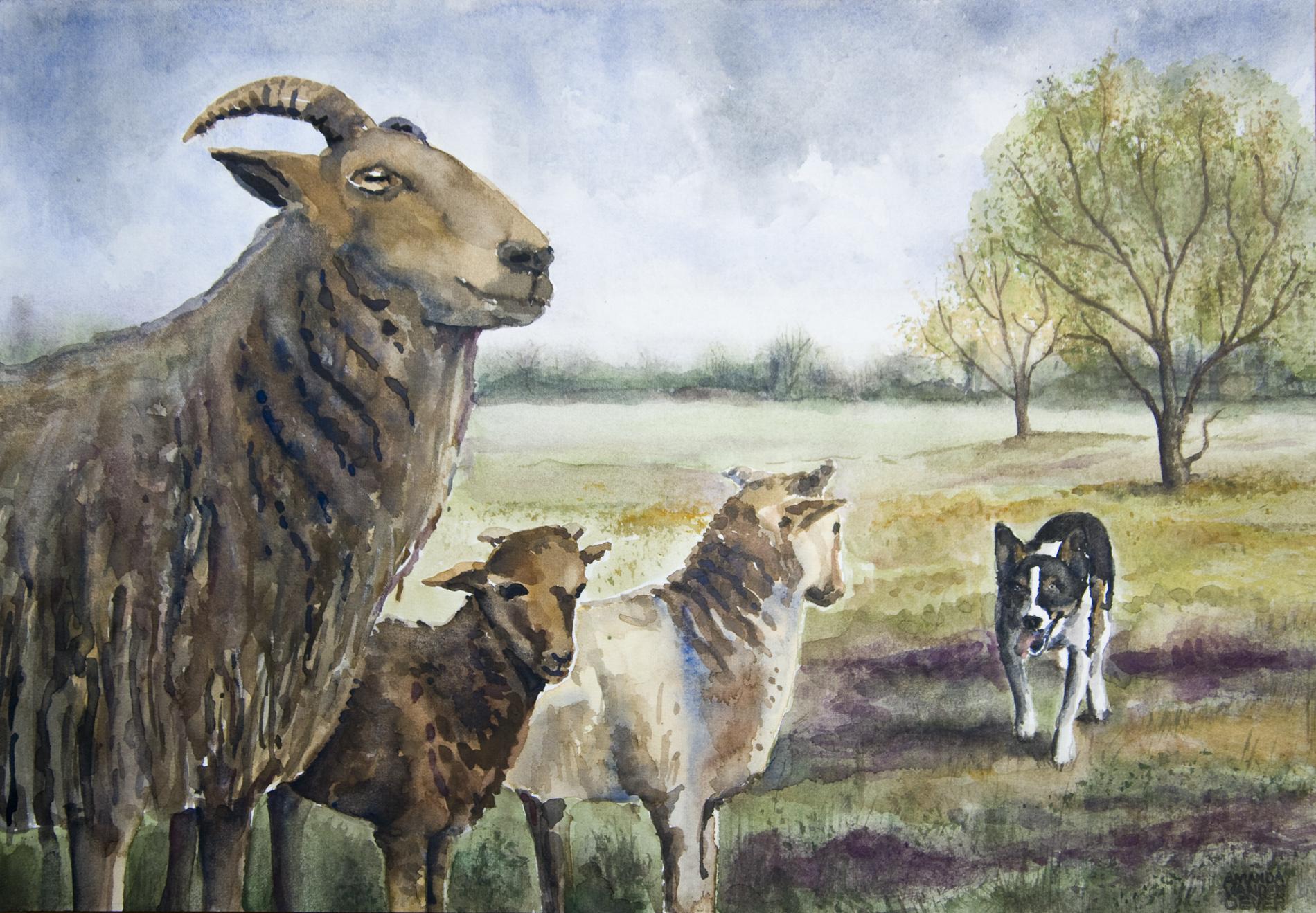 schapendrijven