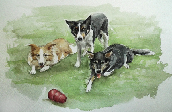 border collies watercolor