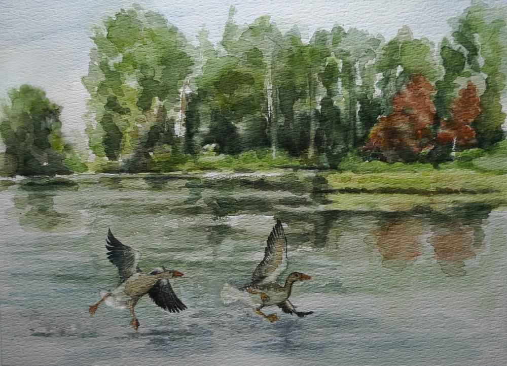 Watercolor geese in lake