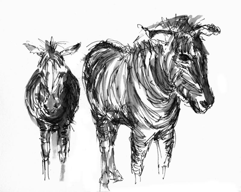 Zeebra's, gewassen inkt tekening