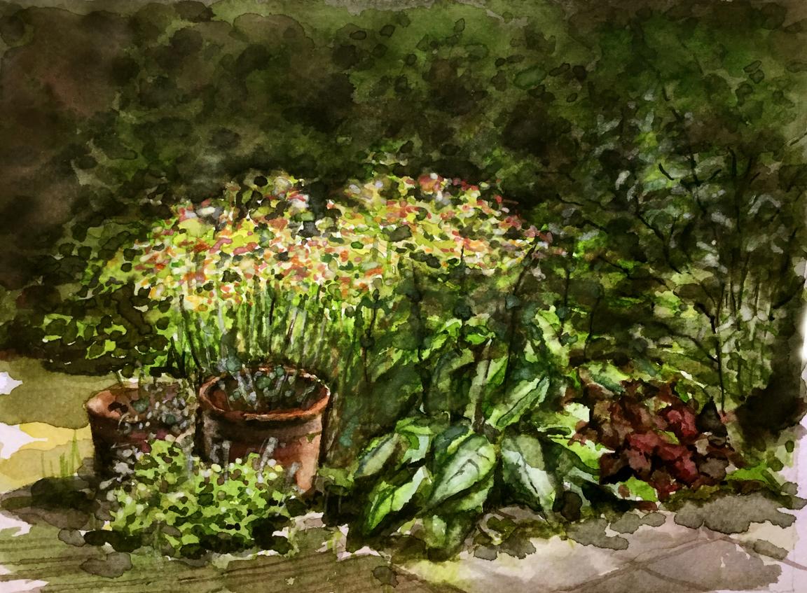 Een stukje van onze tuin. Aquarel