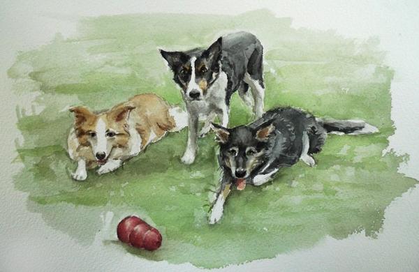 border collies watercolor