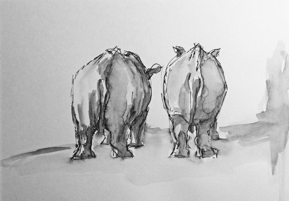 Neushoorns, gewassen inkt tekening