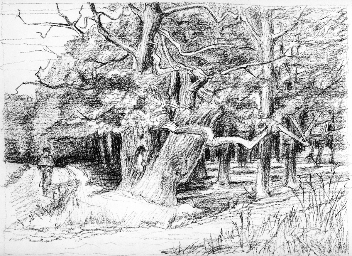 Jaegersborg het oude bomenpark