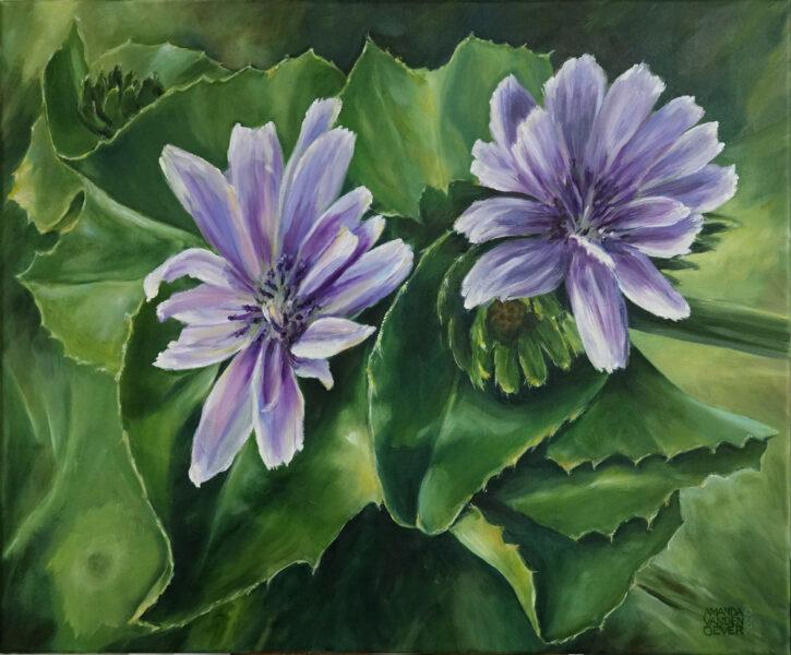 Flowering endive